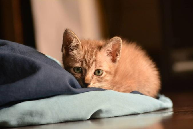 Indoor Cats: How to Keep Them Happy and Healthy