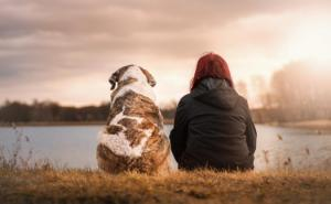 3 Things You Should Consider when Adopting a Dog